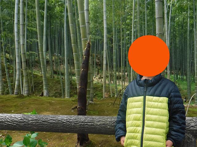 嵐山 竹林タケノコ